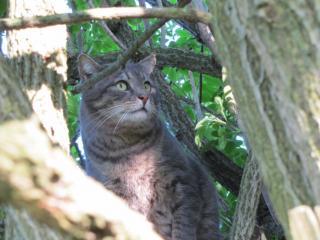 Spider chat tigré gris mâle FIV+ de 08/2005 - dpt 56 Img_1011-278e670